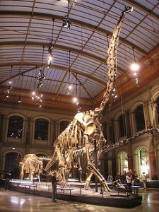 The biggest sauropod was the Giraffatitan